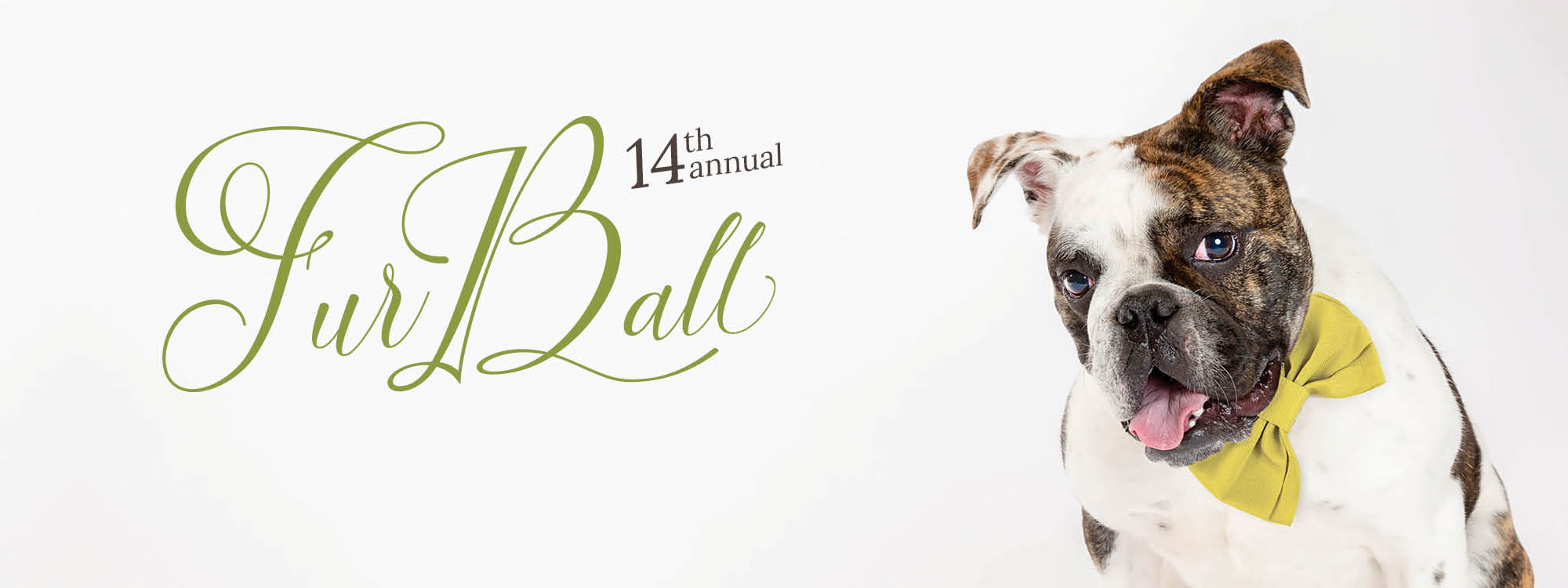 Bulldog in yellow bowtie with 14th annual fur ball text