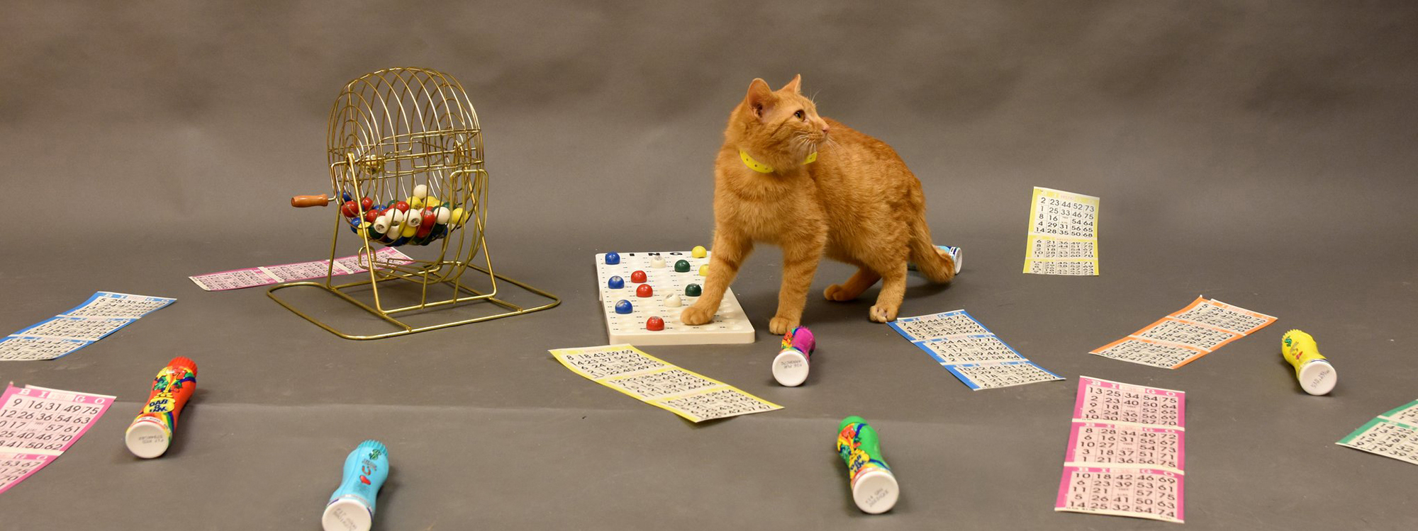 Orange cat among bingo boards and markers