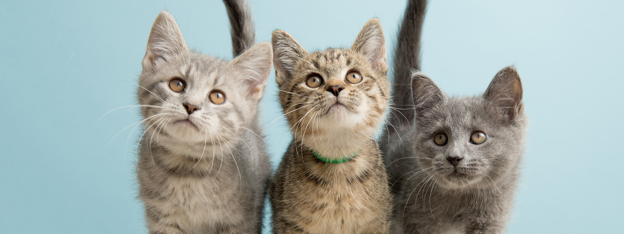 3 kittens in front of a light blue background